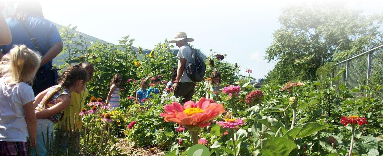 Farm Apprenticeship in Philadelphia | Working on the farm | Novick Urban Farms